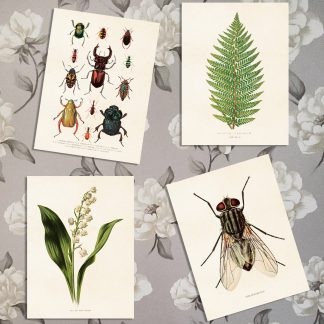 Poster Vintage Collection, 18 x 24cm (Insekter)